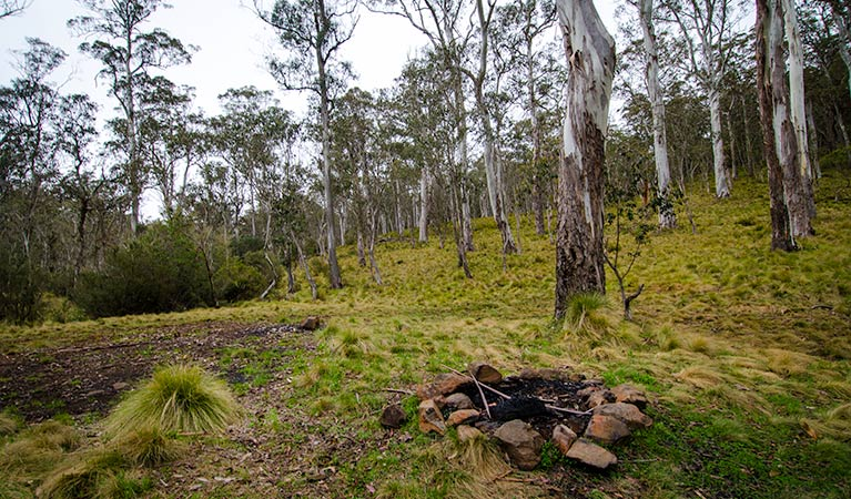 Gummi Falls campground - Accommodation Ballina