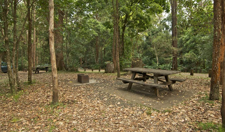 Sheepstation Creek campground - Accommodation Ballina