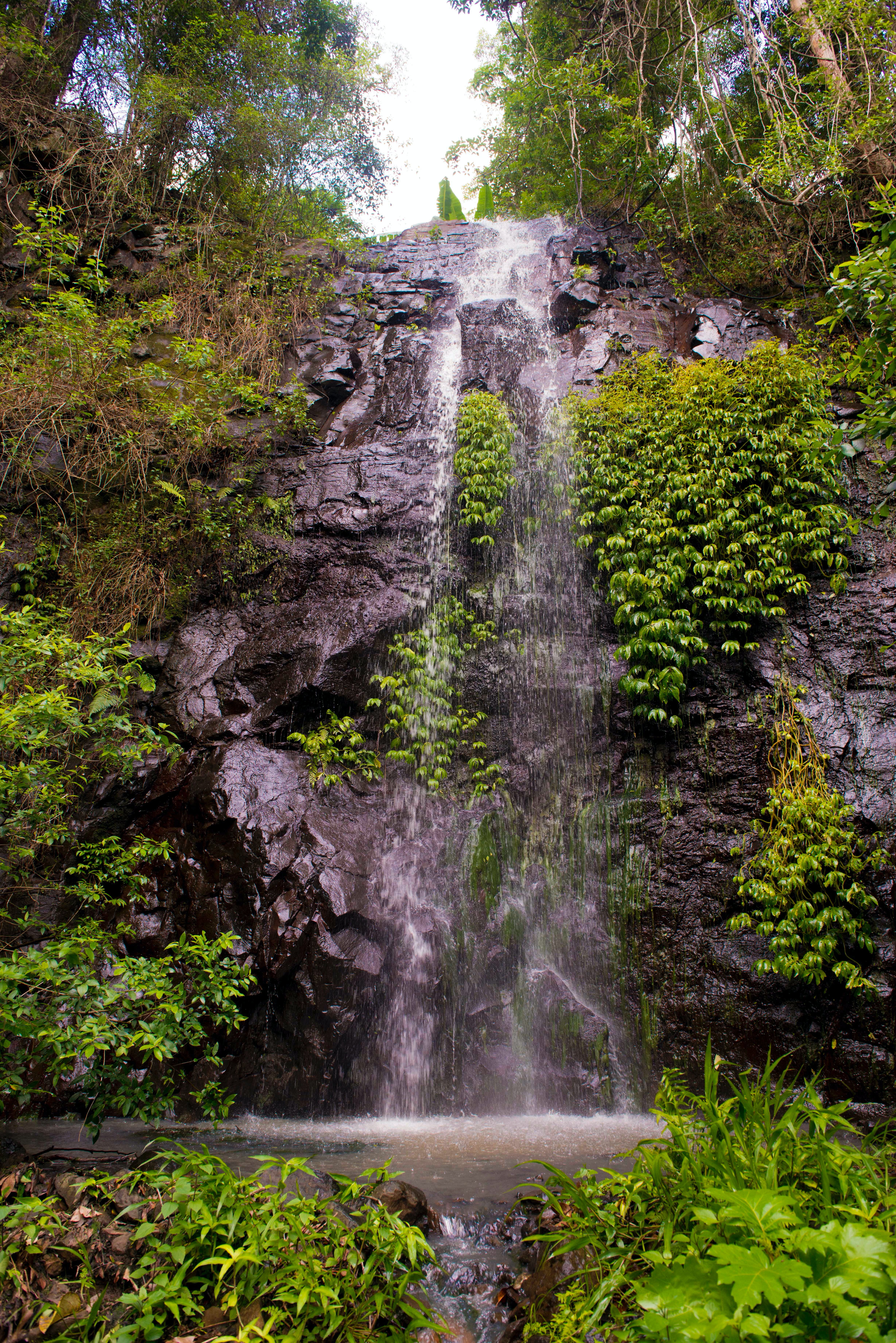 Nimbin Waterfall Retreat - Accommodation Ballina