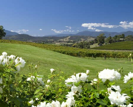 Balgownie Estate Vineyard Resort and Spa - Accommodation Ballina