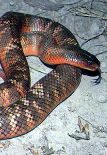Armadale Reptile  Wildlife Centre - Accommodation Ballina