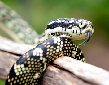 Reptile Encounters - Accommodation Ballina