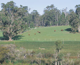Scenic Drives - Bunbury Collie Donnybrook - Accommodation Ballina