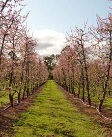 Raeburn Orchards - Accommodation Ballina