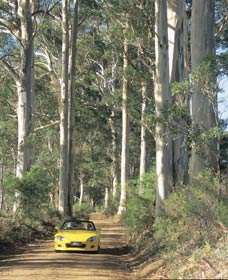 Mount Shadforth Scenic Drive - Accommodation Ballina