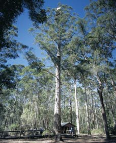 Diamond Tree Lookout Manjimup - Accommodation Ballina