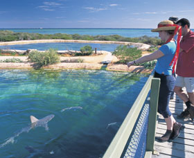 Shark Bay Marine Park - Accommodation Ballina