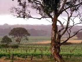 Yangarra Estate Vineyard - Accommodation Ballina