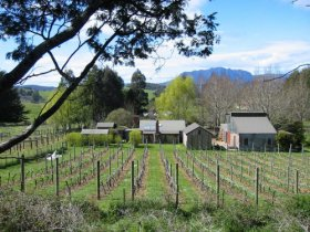 Wilmot Hills Vineyard - Accommodation Ballina