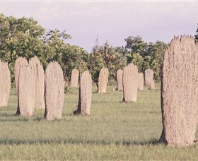 Magnetic Termite Mounds - Accommodation Ballina