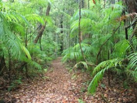 Delicia Road Conservation Park - Accommodation Ballina