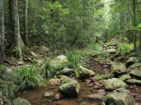 Amamoor State Forest - Accommodation Ballina