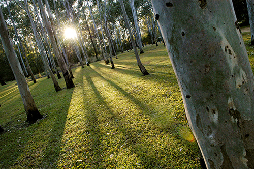 Tondoon Botanic Gardens - Accommodation Ballina