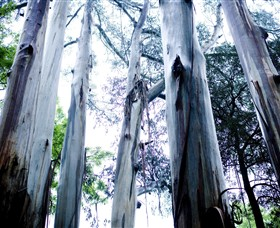 Dandenong Ranges National Park - Accommodation Ballina