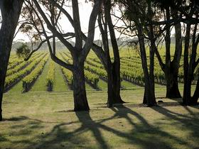 Henry's Drive Vignerons - Accommodation Ballina