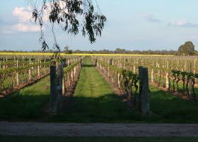 Water Wheel Vineyards - Accommodation Ballina