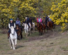 Burnelee Excursions on Horseback - Accommodation Ballina