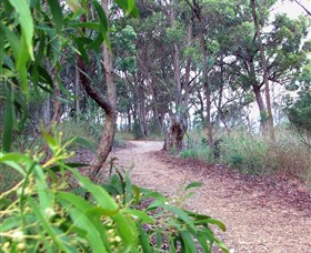 Mount Mutton Walking Trail - Accommodation Ballina