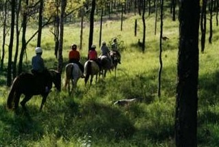 Hunter Valley Horse Riding and Adventures - Accommodation Ballina