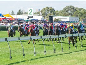 Morphettville Racecourse - Accommodation Ballina