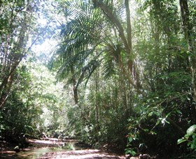 Mount Lewis National Park - Accommodation Ballina