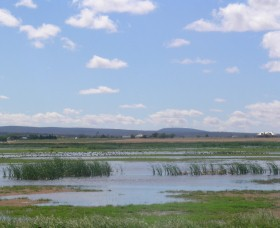 Fivebough Wetlands - Accommodation Ballina