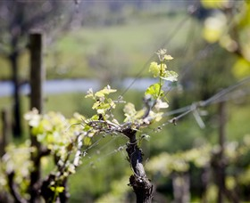 Mountainside Wines - Accommodation Ballina