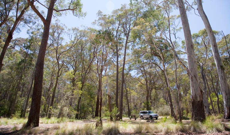 Coolah Tops National Park - Accommodation Ballina