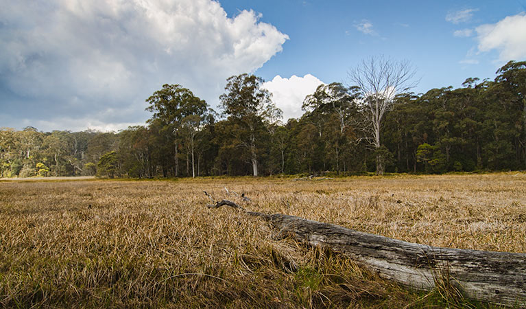 Mummel Gulf National Park - Accommodation Ballina