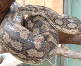 Armadale Reptile Centre - Accommodation Ballina