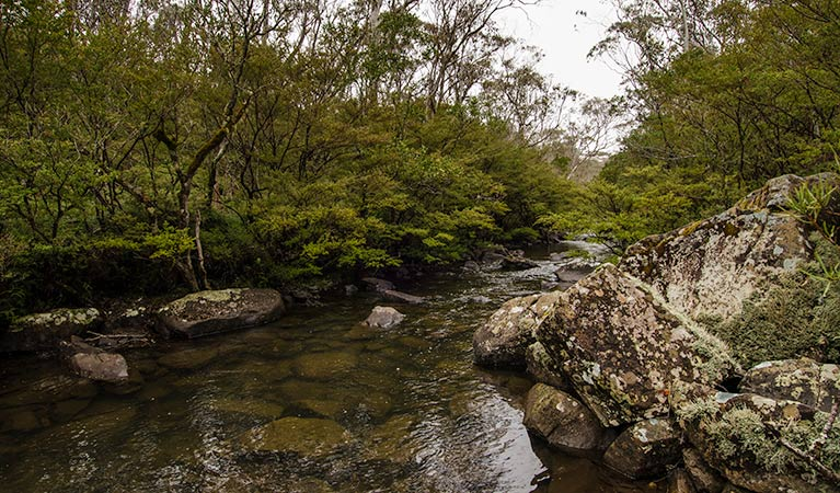River walking track - Accommodation Ballina