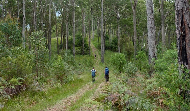 The Green Gully track - Accommodation Ballina