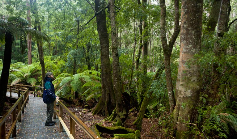 Monga National Park - Accommodation Ballina