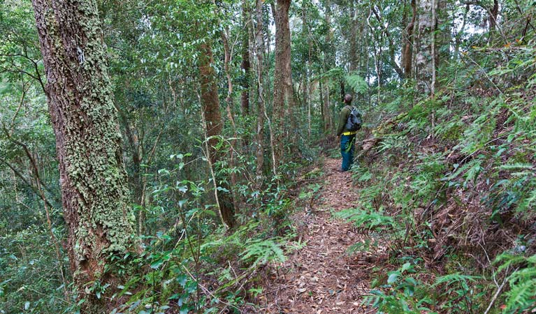 Blackbutt walking track - Accommodation Ballina