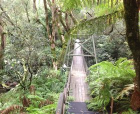 Bemm River Scenic Reserve - Accommodation Ballina