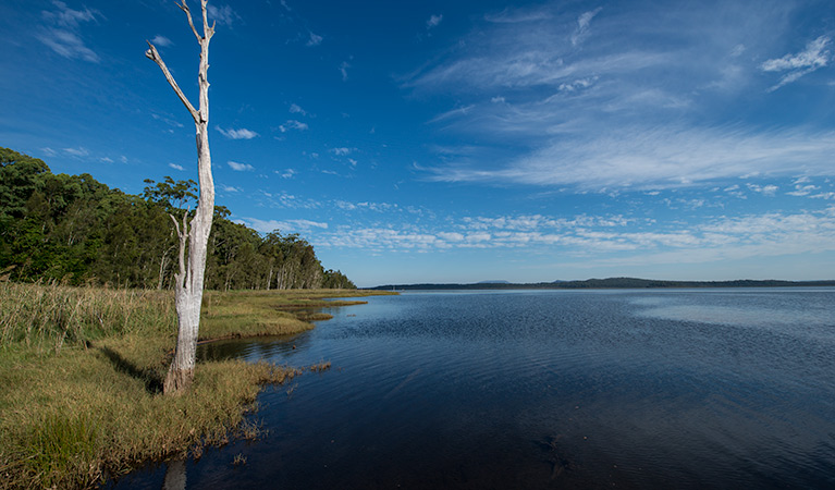 Lake Innes Nature Reserve - Accommodation Ballina