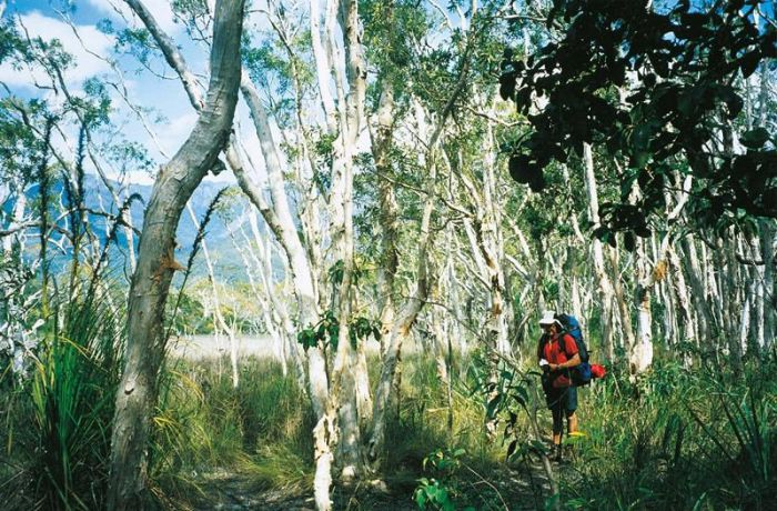 Thorsborne Trail Hinchinbrook Island National Park - Accommodation Ballina