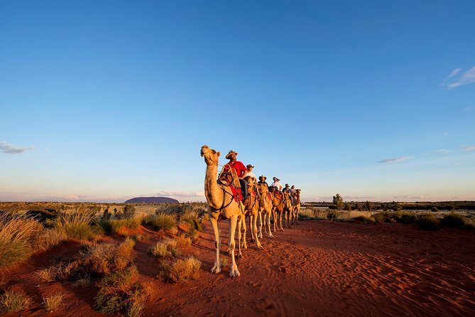 Uluru Camel Express Sunrise or Sunset Tours - Accommodation Ballina