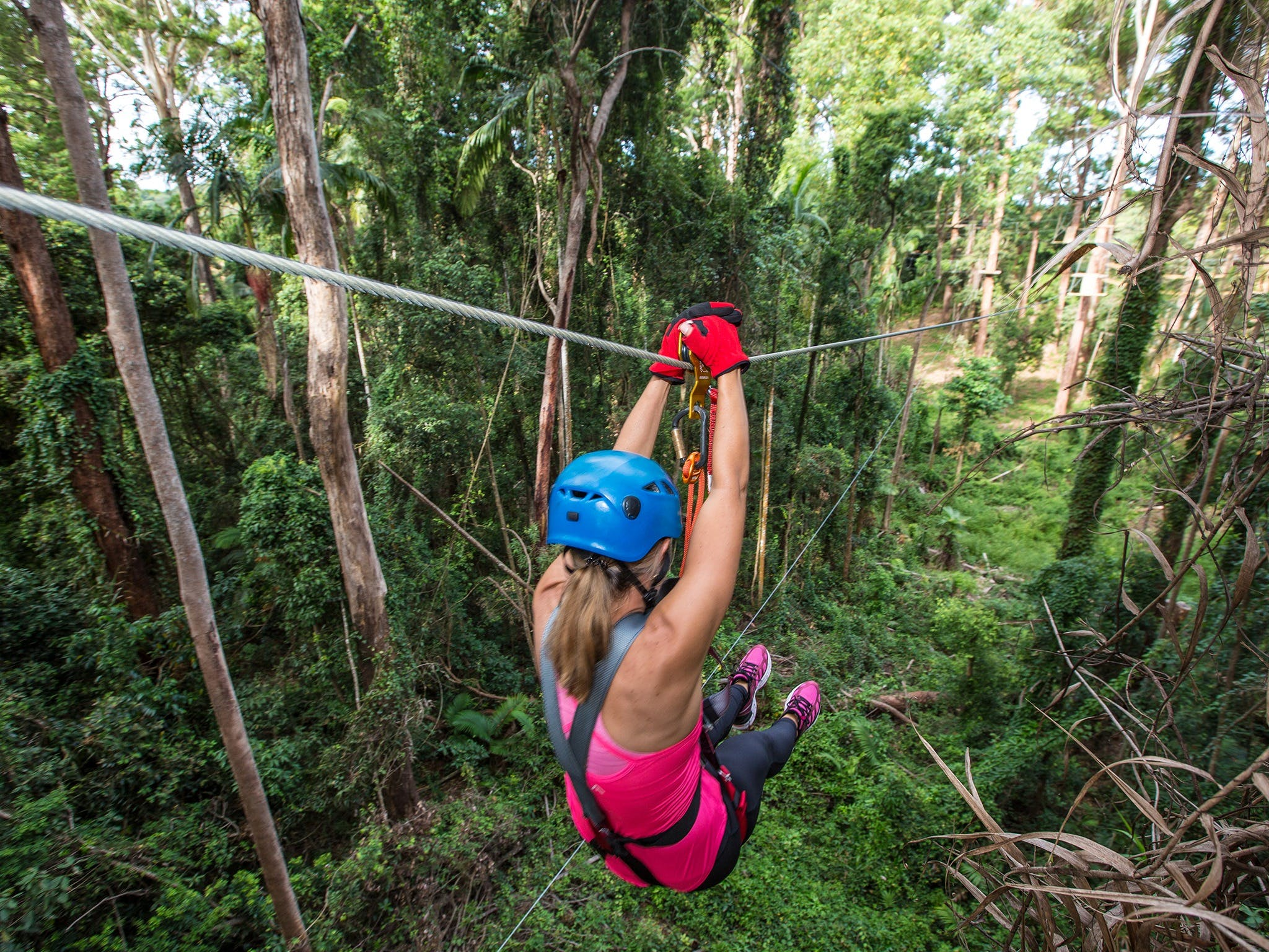 TreeTop Challenge - Sunshine Coast - Accommodation Ballina