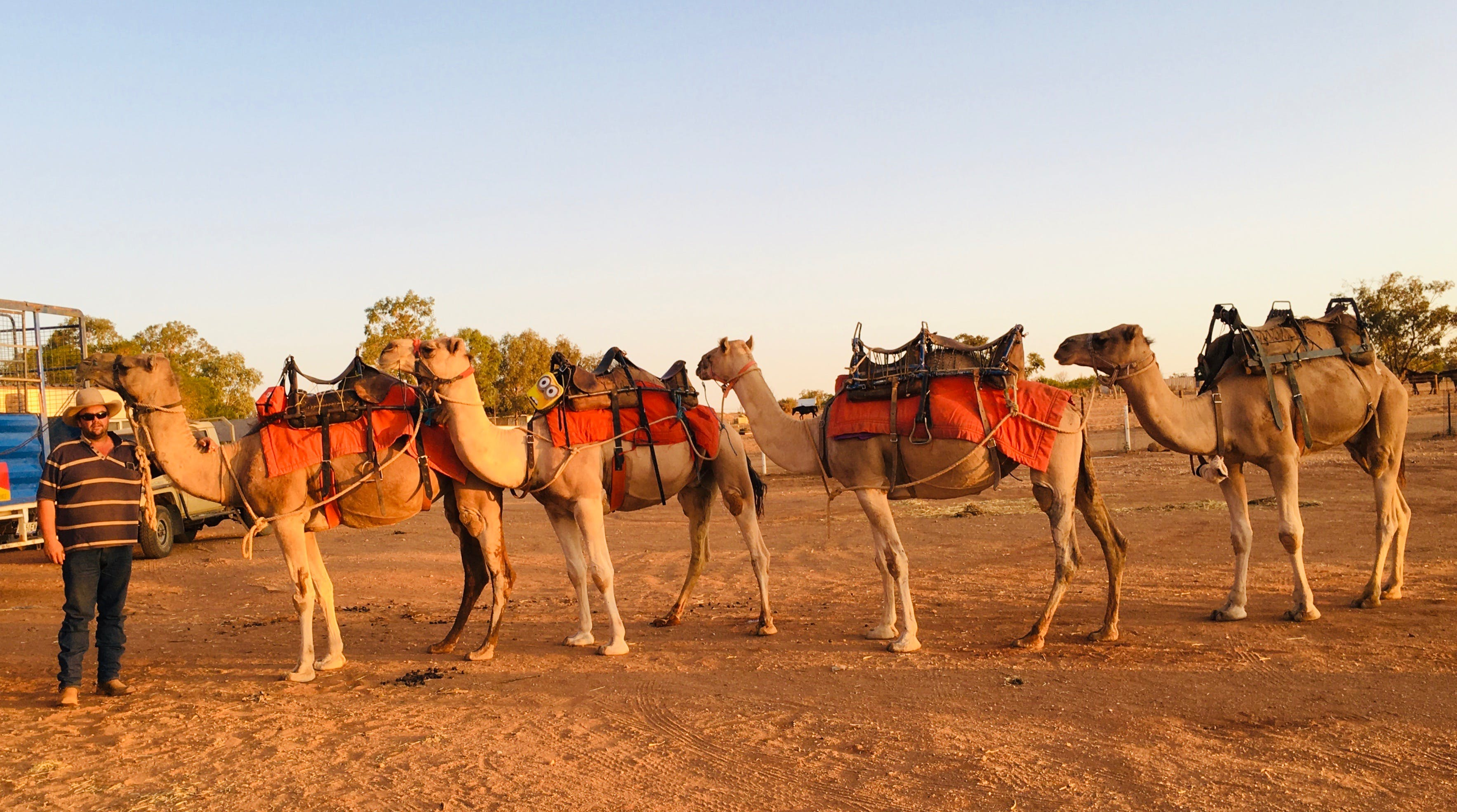 Broken Hill Camels - Accommodation Ballina
