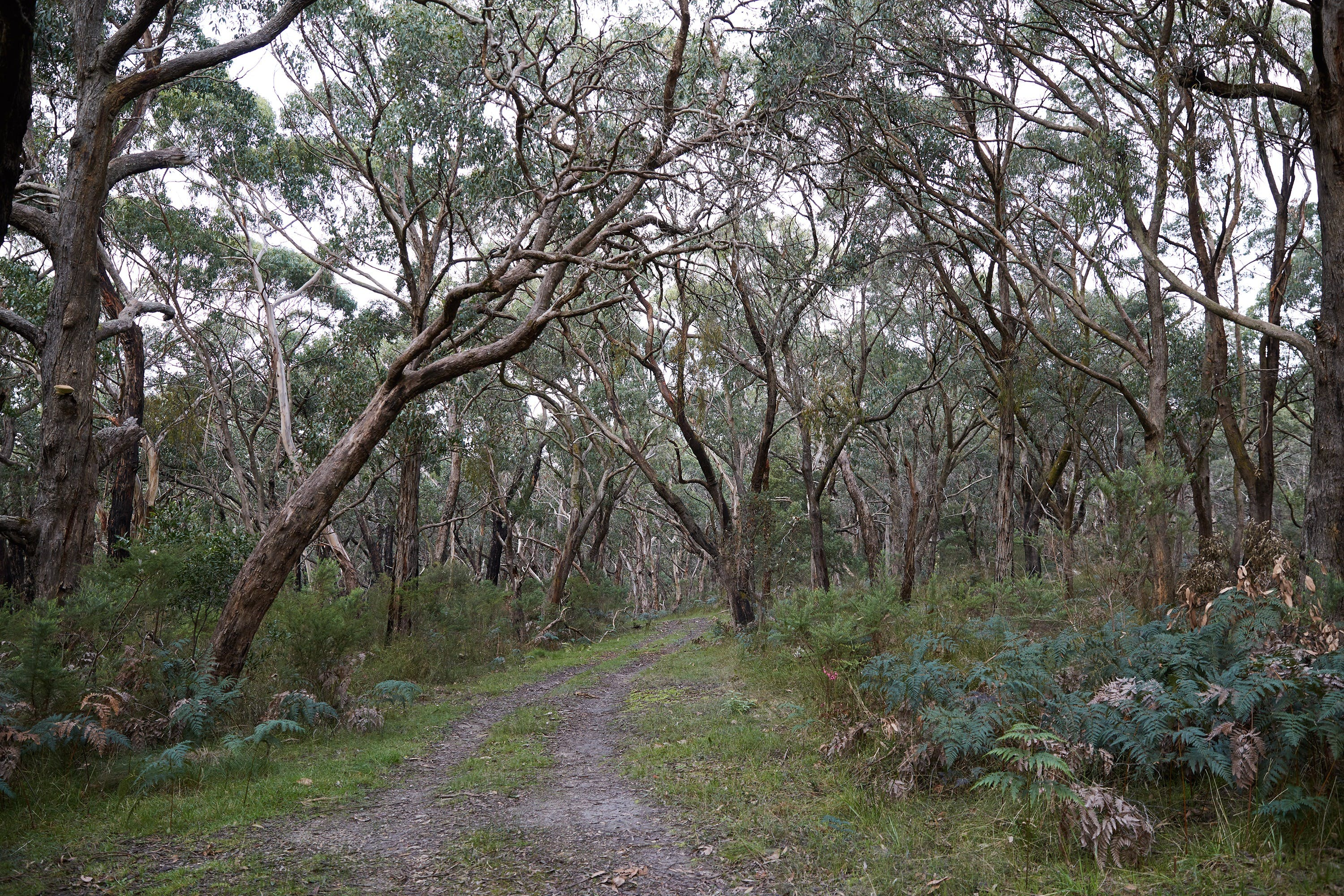 Pink Line and Loop Trail - Mountain Biking - Accommodation Ballina