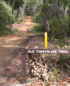 Old Timberline and Sidings Rail Trails - Accommodation Ballina
