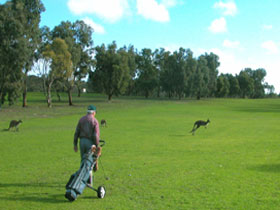 Coffin Bay Golf Club - Accommodation Ballina
