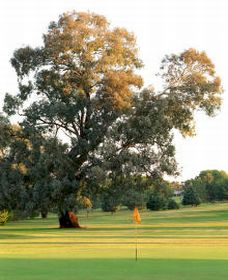Cowra Golf Club - Accommodation Ballina