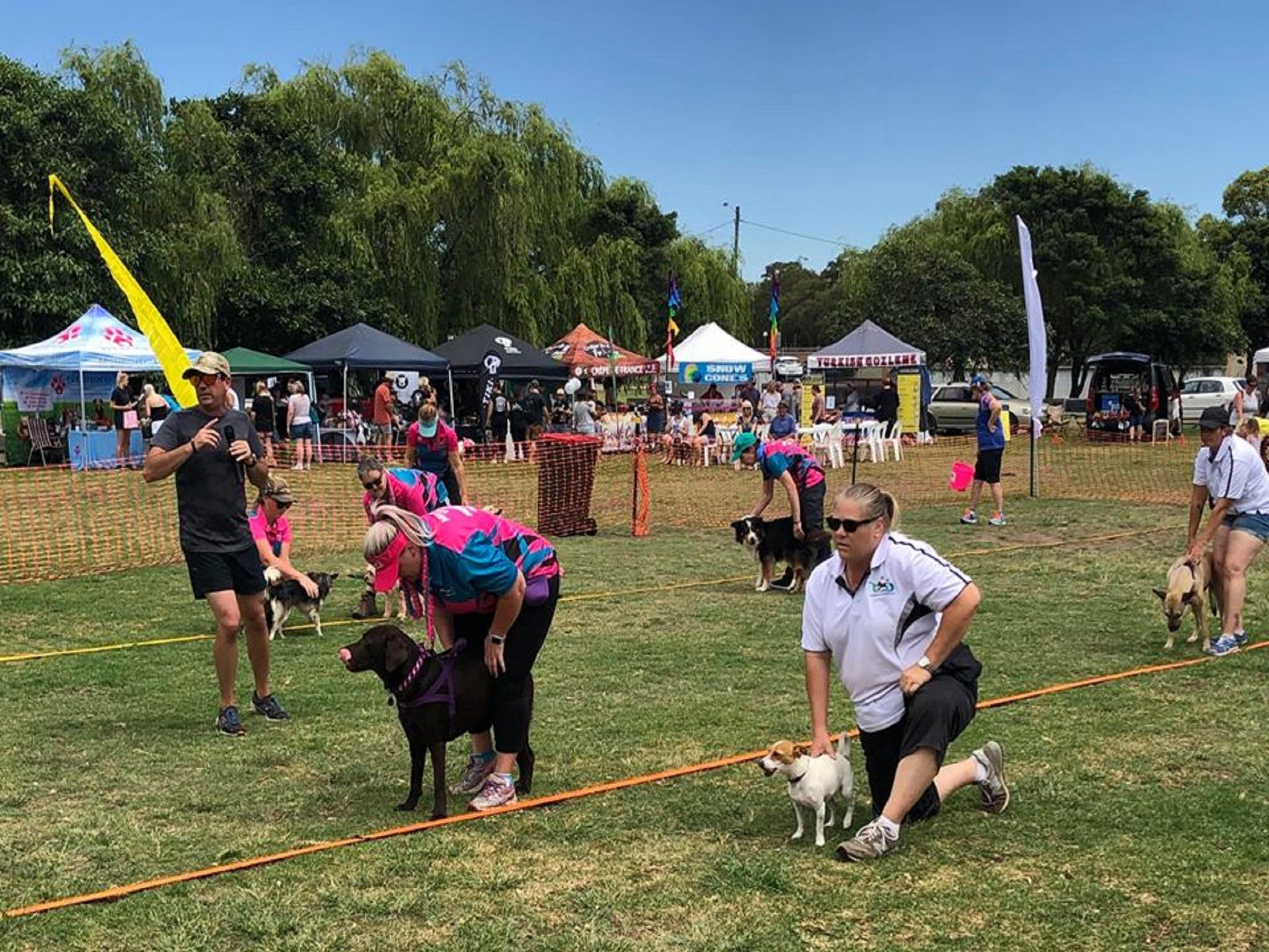 Dogs in the Park Orange - Accommodation Ballina