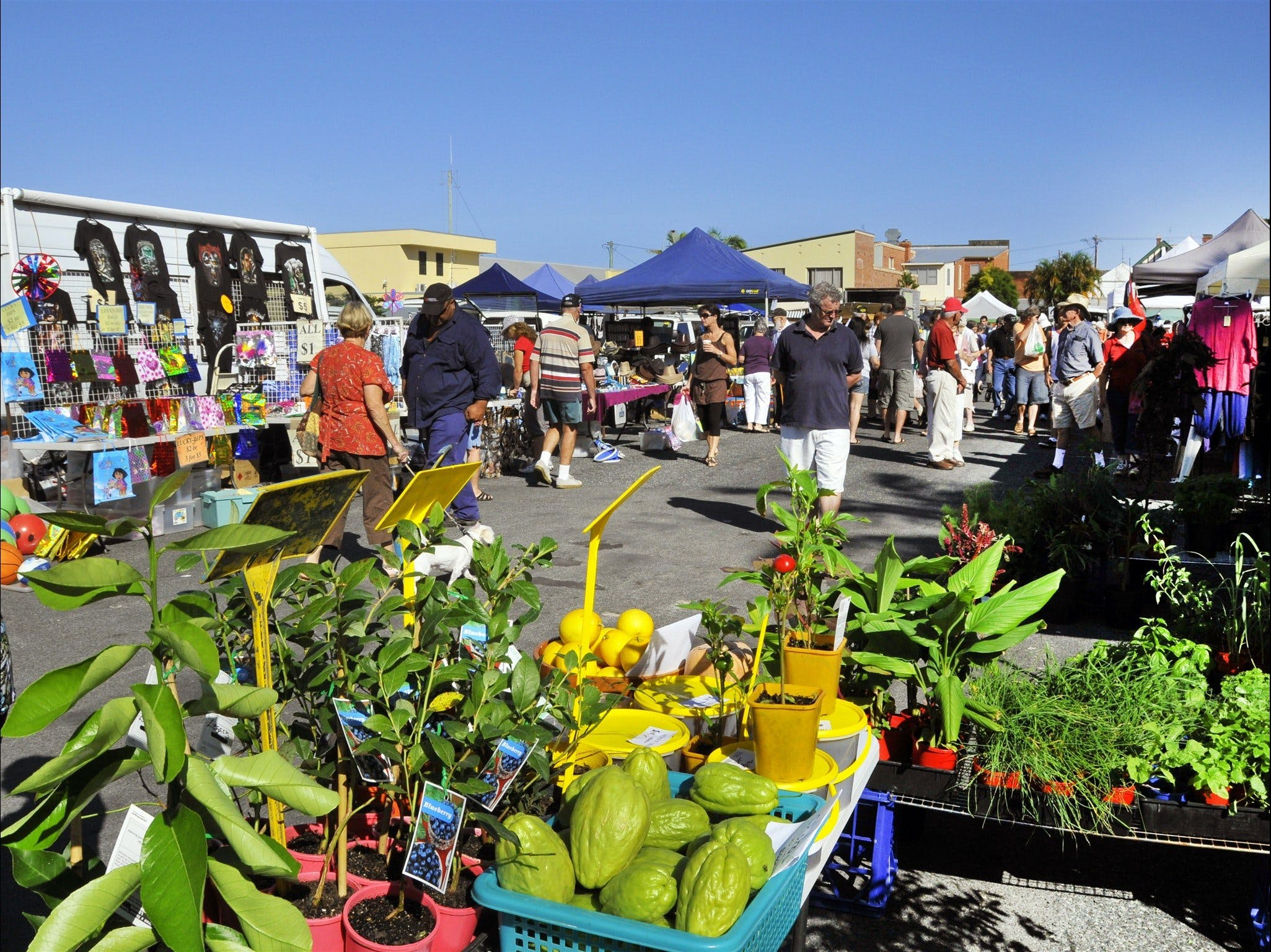 Maclean Community Monthly Markets - Accommodation Ballina
