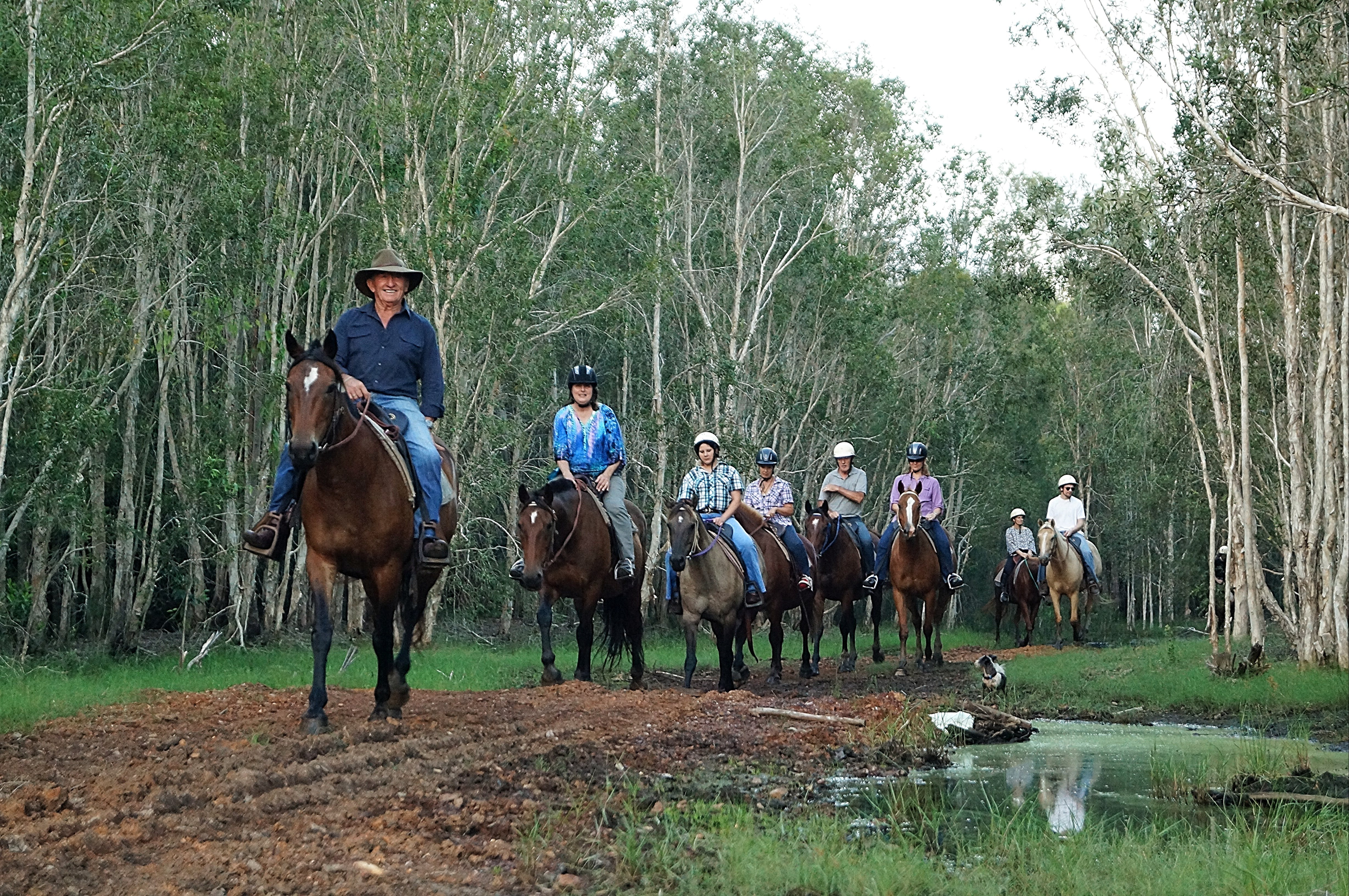 Night Horse Ride and Dinner - Accommodation Ballina