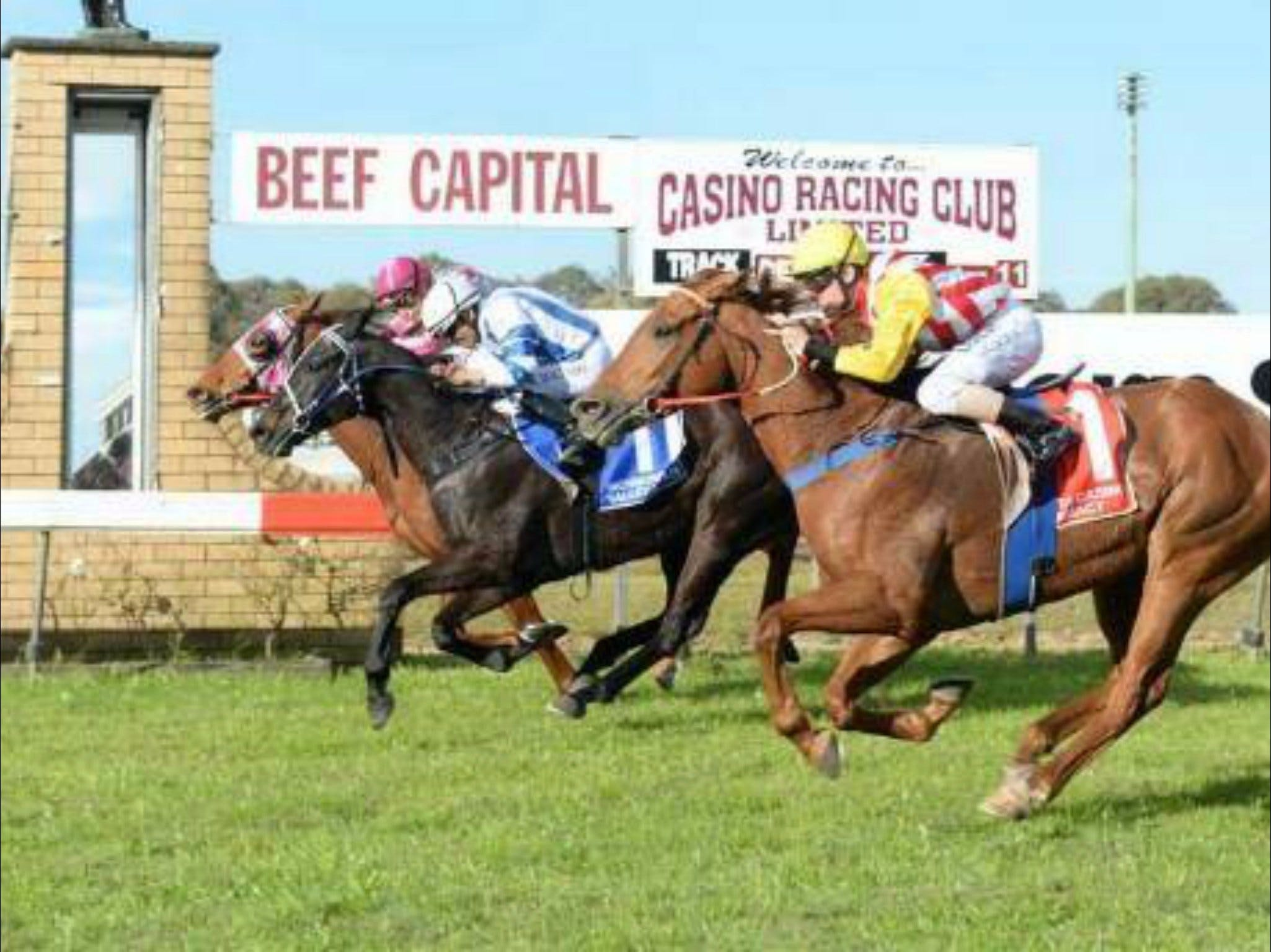 Casino Cup - Accommodation Ballina