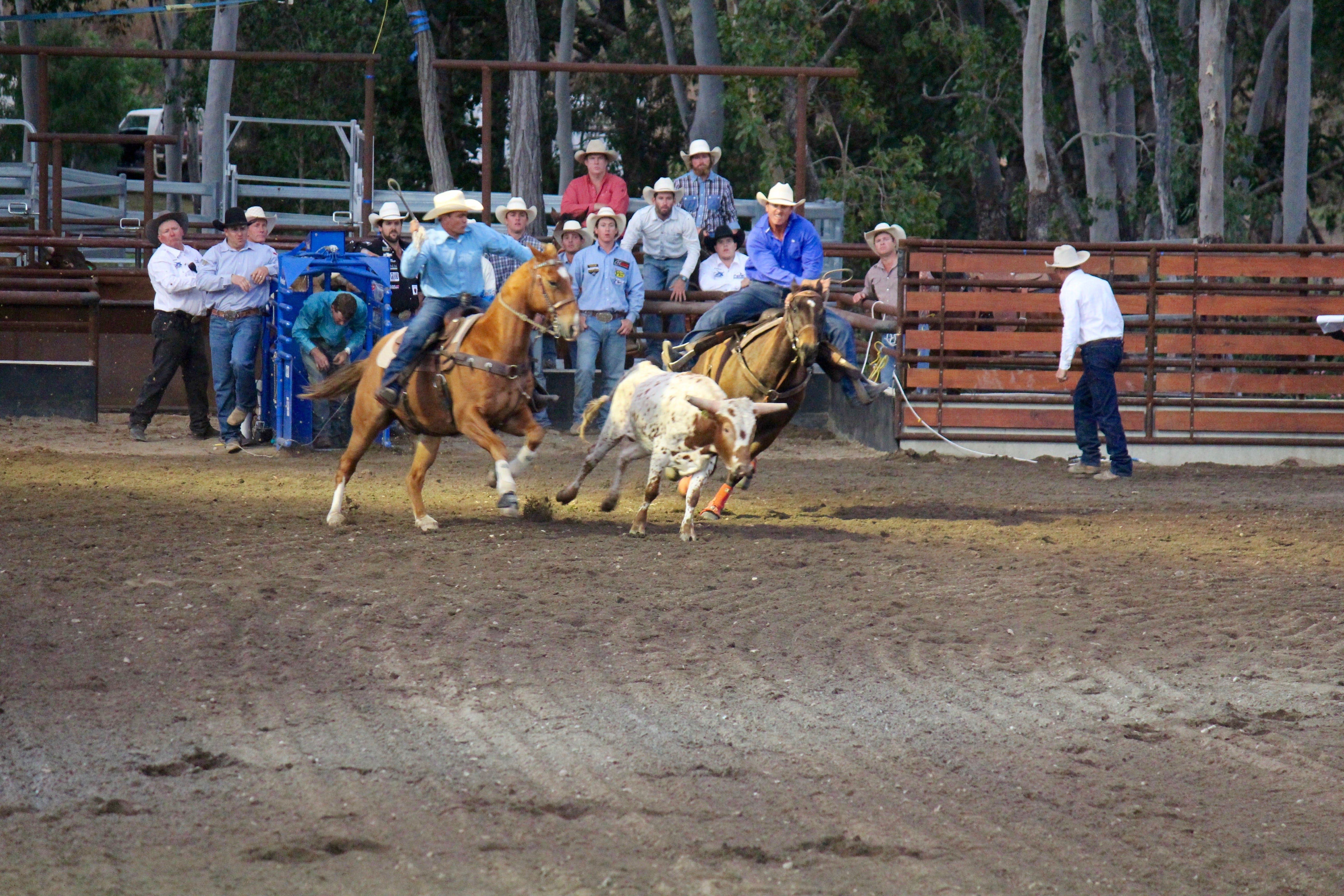 North Queensland Elite Rodeo - Accommodation Ballina