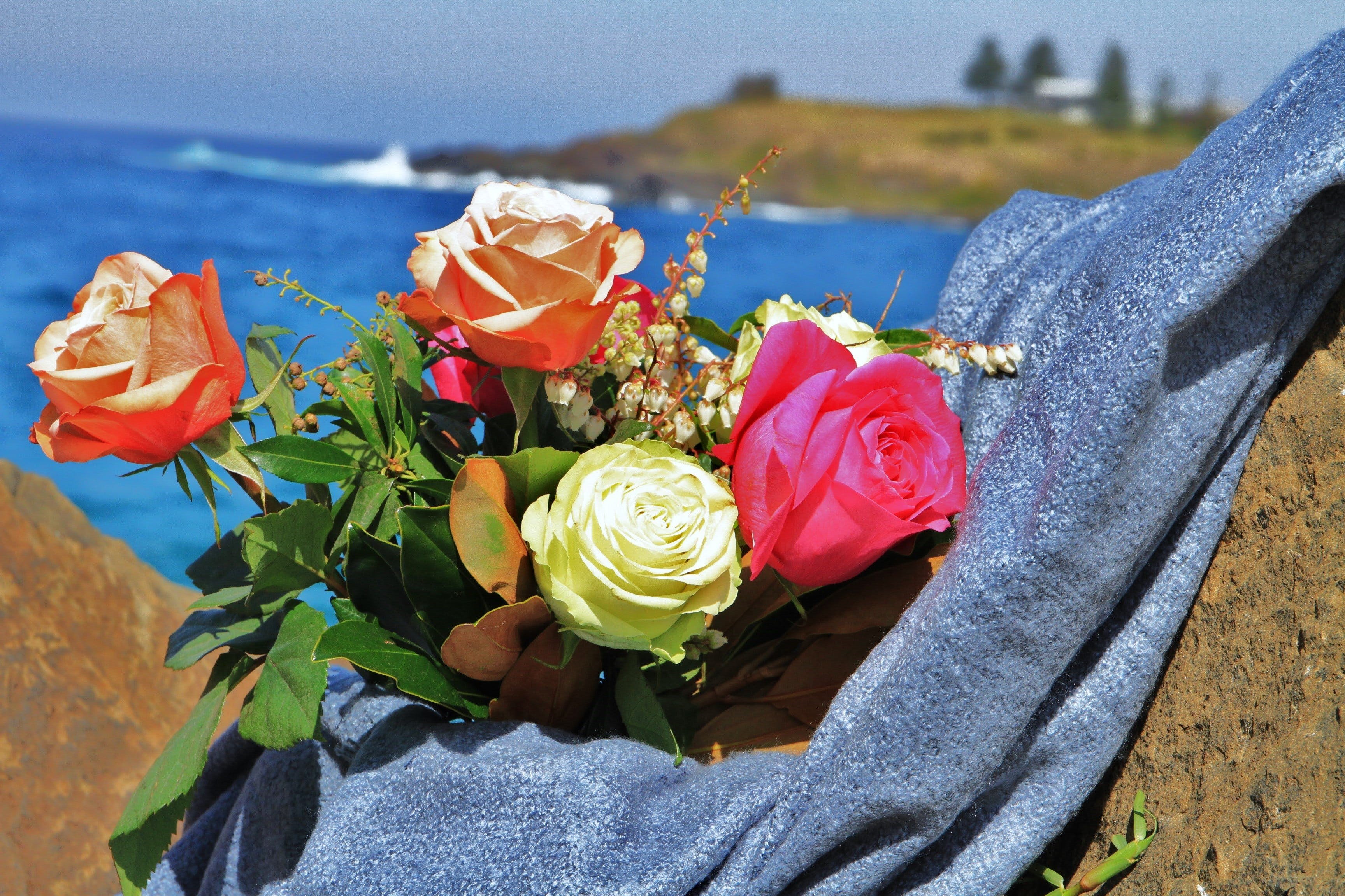 Roses by the Seaside National Rose Championships and Conference - Accommodation Ballina